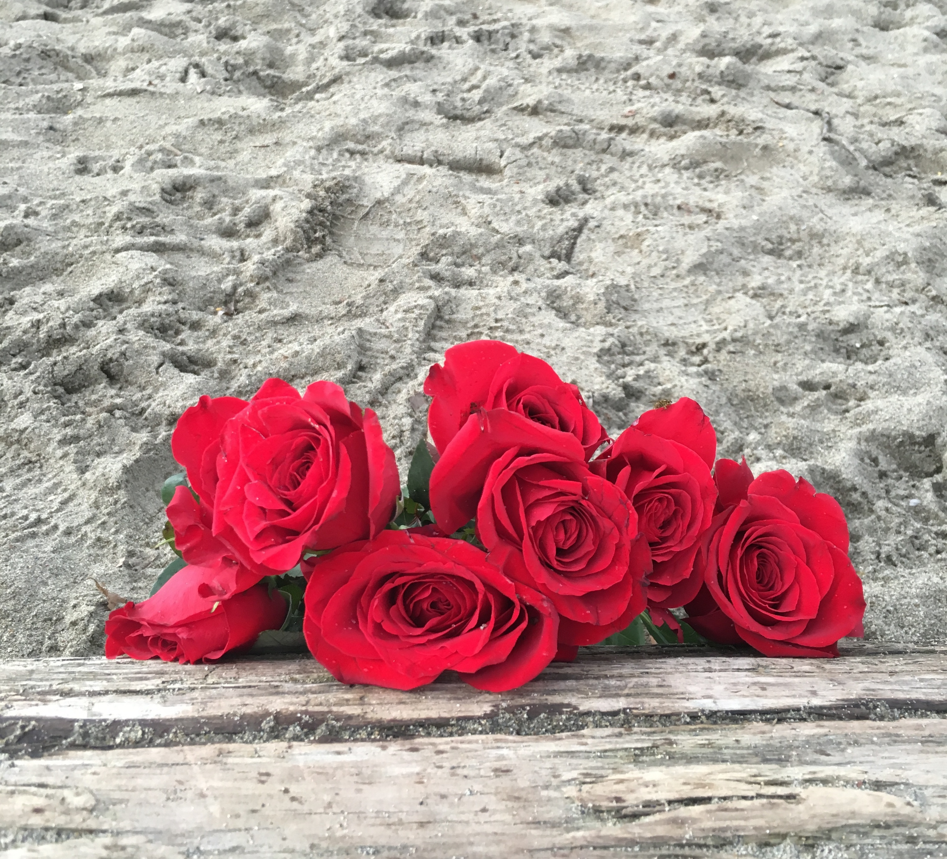 A bouquet of roses lean against a sun-bleached log on an empty beach.