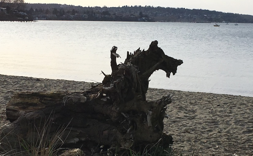 A beached log with the silhouette of a wolf appears to have a mini-woman riding it; it stares off the frame toward the sea