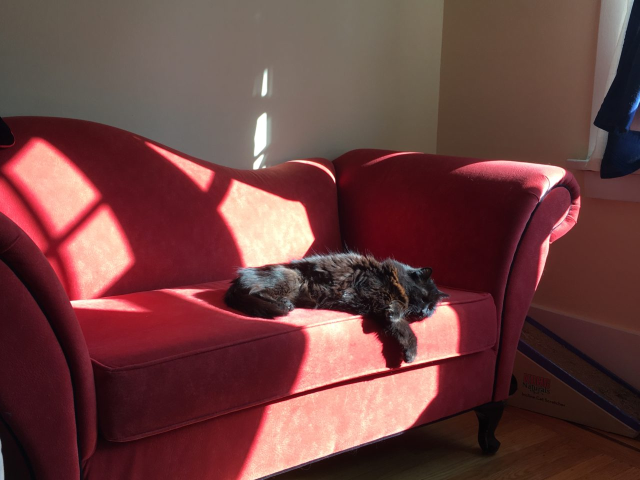 Cat lounging on red couch in full summer sun. Throwback Thursday for cats.