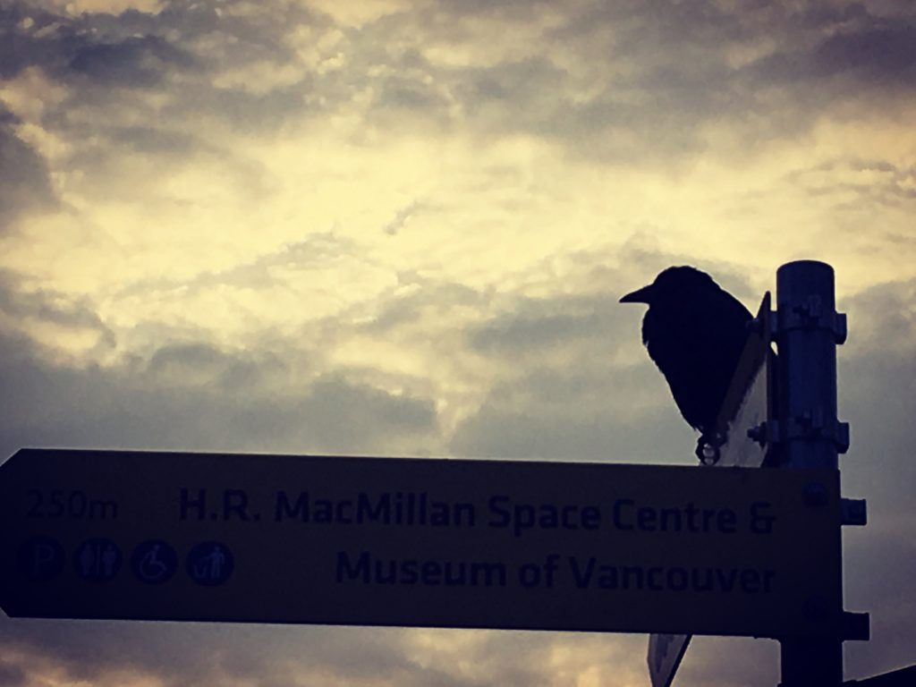Photo of crow at sunset, perched on sign with directions to a museum and the space centre