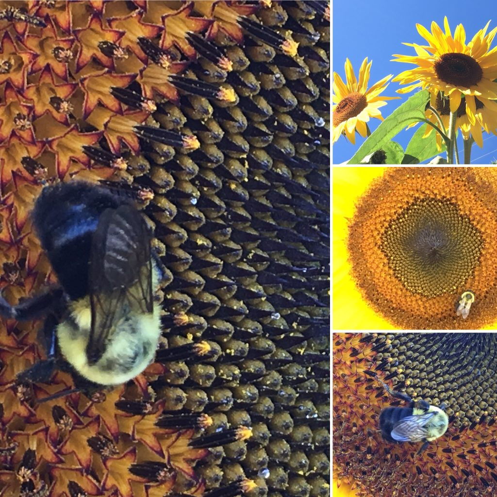 Layout of one large photo and three smaller ones, with each showing a closer shot of a bee in the centre of it